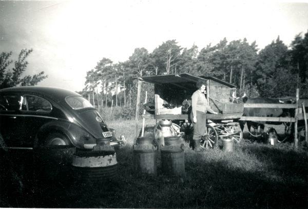 Smiss 610: Judit Larsson, född Hansson i Lye år 1928, mjölkar ute på fältet