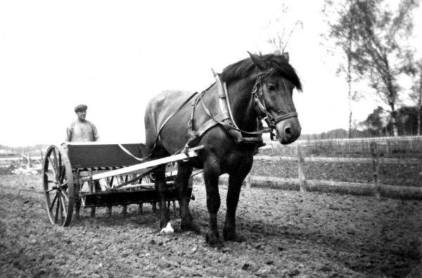 Ragnar Jakobsson Haltarve 213, född 1894, med såmaskin