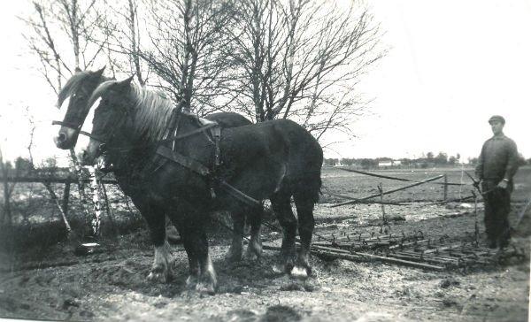 Viktor Pettersson Frigges 339, född 1907 vid Frigges 345, med pinnharv