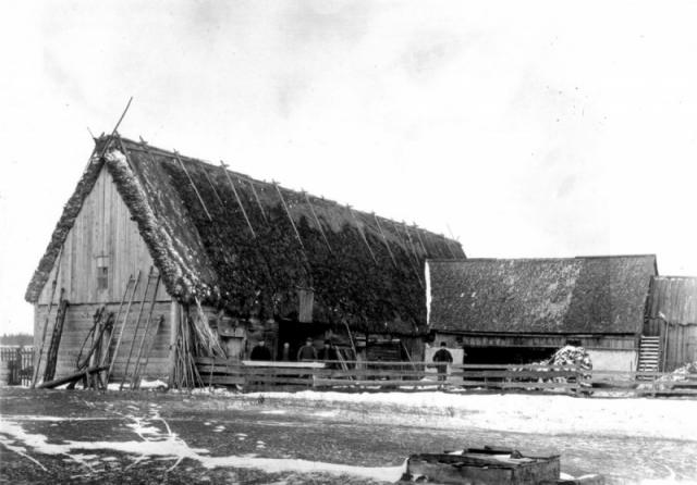 Ladugård vid Mickels 393. Fotot är från 1912 då mågen Karl Nilsson från Rikvide hade övertagit ägarskapet.