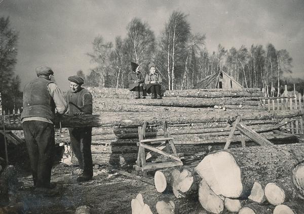 Här är det mycket som skall sågas: från vänster Ragnar Jakobsson Haltarve 213, född 1894, Oskar Johansson Haltarve 219, född Hallbjänne 690 år 1888. Barnen är Boel Nilsson Bosarve 166, född 1938 och finlandsbarnet Toini Leino (syster till Risto Leino).