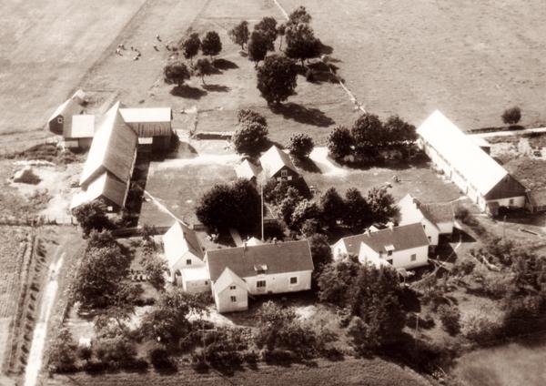 Flygfoto över Mickelgårds med den gård, Mickelgårds 395, som Brita Thomsson växte upp på och som i dag ägs av sonen Jörgen till vänster och den som innehades av Josef och Linda Larsson, Mickelgårds 393, och som i dag ägs av Lennart Olsson Hallute 115 till höger.