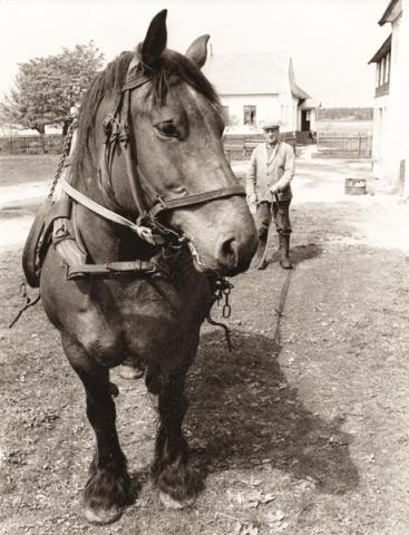 Mickels 607: Olof – Mickels Olle – Häglund, född 1903, med sin häst.