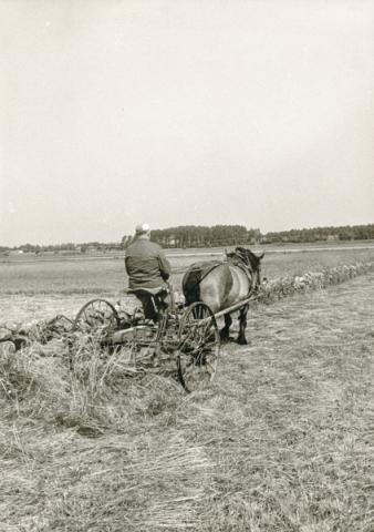 Olof – Mickels Olle – Häglund Mickels 607, född 1903, med hövändare eller hästräfsa.