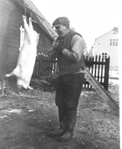 Henrik Pettersson Hägdarve 403, född 1899, – far till Torsten Henriksson – slaktar gris