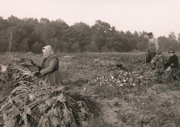 Kulle 862: Augusta Jakobsson född 1880 Pettersson Frigges 342 och hennes man Karl – Kull-Kalle – Jakobsson född 1878 samt dottern Fanny Jakobsson född 1903 nackar betor