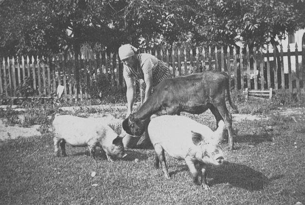 Alfhild Jakobsson Haltarve 213, född Salmberg vid Hallute 173 år 1906, matar grisar och kalv