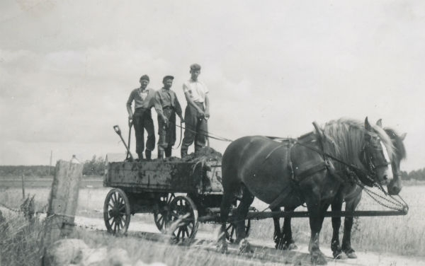 Bröderna Karl Olle Larsson, född 1936, och Rune Larsson, född 1938, vid Smiss 616 – bröder till Anna-Lisa Henriksson vid Hägdarve 403 – samt Åke Thomsson med en gödselvagn. Bilden är tagen från Kvarnen mot Smiss.