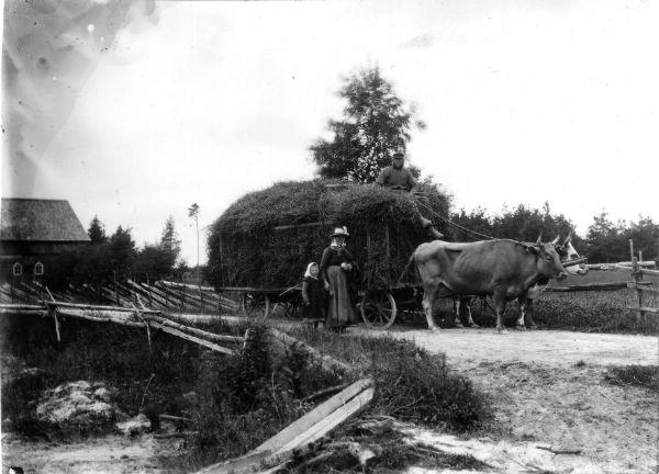 Gangvide 513: Hans Larsson Gangvide 513, född 1861 vid Hallbjärs 613, kör en foderhäck med oxar. Dottern Hilda Larsson, född 1897 och gift Johansson i Alskog; och hustrun Maria Larsson, född Larsdotter vid Smiss 616 år 1872, står bredvid.