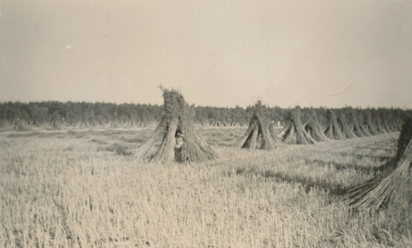 Hampskörd vid Siglajvs 848