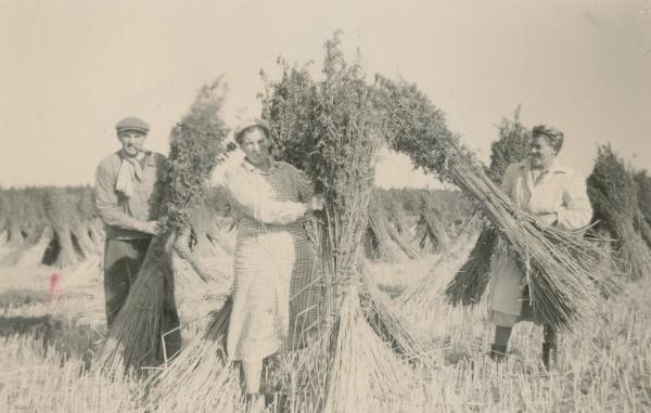 Hampskörd vid Siglajvs 848: till vänster med pipa i munnen Karl-Gustav Hägg, född Jakobsson 1929, och längst till höger hans hustru Elsie Hägg, född i Hejde. Kvinnan i mitten okänd