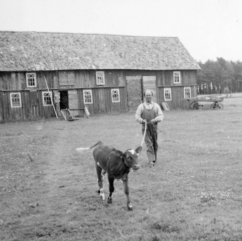Smiss 523 ED: Gustav Dahlkvist (1925-96)med kalv.