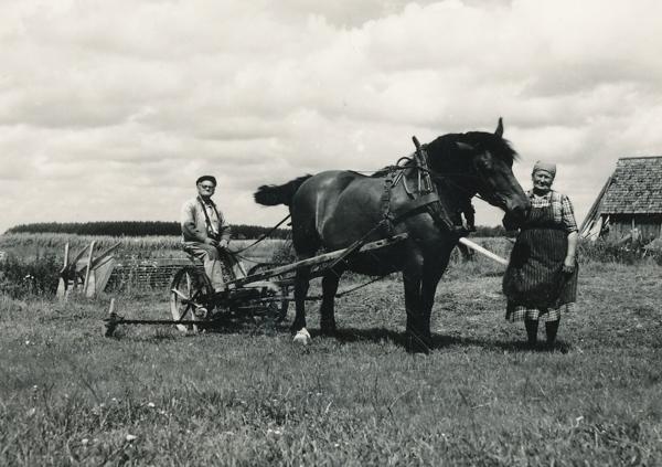 Smiss 523 vid Nybro: på slåttermaskinen sitter Emil Dahlqvist, född 1887, och vid hästen som möjligen hette Felix står hustrun Emelie, född Pettersson från Burs.