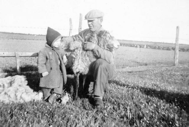 Öndarve 880 OO: Olof Olsson (1910) lär dottern Ingrid (1945) hur man klipper lamm.