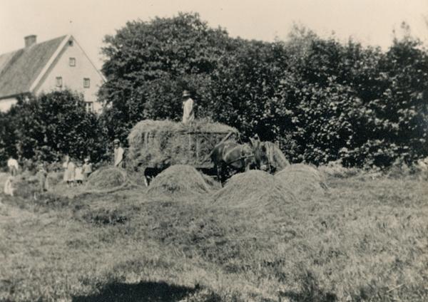 Hölass i närheten av prästgården: nedanför lasset syns Oskar – Klockar Oskar – Jakobsson Hallute 146, född vid Dalbo AJ 1892, och ovanpå hölasset står hustrun Agda Jakobsson, född 1897; på bilden syns också några av de fem barnen.