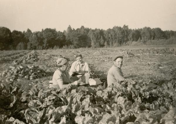 Tar upp betor 1953. I betlandet vid Siglajvs 848: från höger Karl-Gustav Hägg, född Jakobsson 1929; hustrun Elise Hägg från Hejde; kvinnan till vänster okänd
