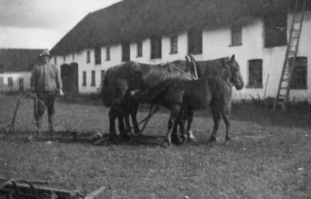 Ladugården vid Bomunds i Burgen 802 IP med Nils Pettersson (1879-1951) och häst med föl.