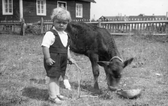 Enung kalvvakt vid Folke 849 AA; Sigvard Ahlkvist (1935) och kalven Piggus.