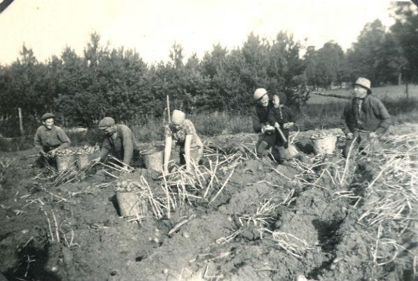 """""""Pärupptagning"""" Kulle 862: Från vänster Karl-Gustav Jakobsson, född 1929 vid Siglajvs 848, gift Hägg; Artur Dahlgren, född 1907 vid Vike i Östergarn; Elsa Olsson Öndarve 873, född 1920; Hermanna Dahlgren, född Jakobsson 1909, med adoptivsonen Matti, född 1937; Karl – Kull-Kalle – Jakobsson, född 1878."""