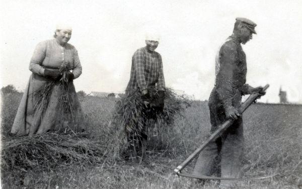 Skörd vid Kulle 862: Augusta Jakobsson, född Pettersson vid Frigges 342 år 1880; dottern Fanny, född 1903; och Karl – Kull Kalle – Jakobsson, född 1878.