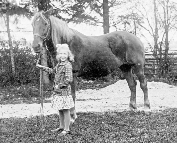 Haltarve 219 RJo; den 8-åriga Edith Johansson (1922), gift Hallbjänne 545 GJ vid Vadi, med hästen i god kontroll.