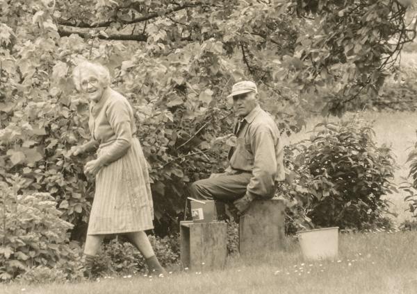 Liffor 259: Siv och Nisse Hägrings föräldrar Emil Jakobsson, född 1900 vid Bosarve 166, och hans hustru Helga, född Häglund vid Mickels 607 år 1904, plockar bär.